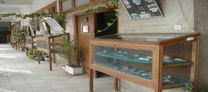 متحف قسم الجيولوجيا بمبنى المعامل